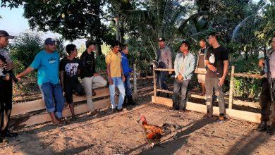 Photo of Gerebek Judi Sabung Ayam di Gori-Gori, Polsek Batui Amankan 14 Pelaku dan Puluhan Barang Bukti