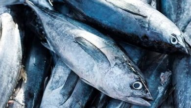 Photo of Gorontalo Terbanyak Kirim Ikan Tuna ke Jepang