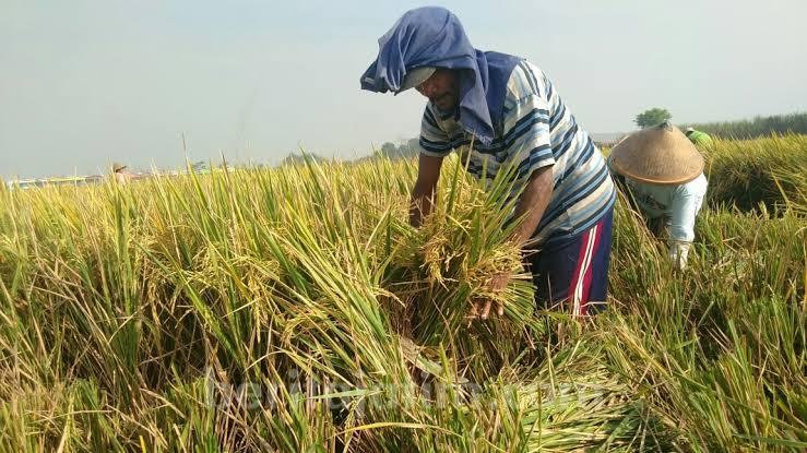 Foto Anggota Komisi IV DPR RI, Hermanto, berharap pemerintah memberikan anggaran tambahan untuk mencukupi pangan nasional.