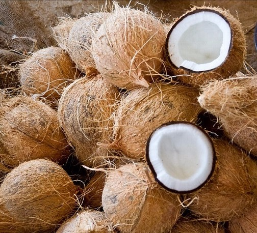 Semi husked coconut wholesale from indonesia
